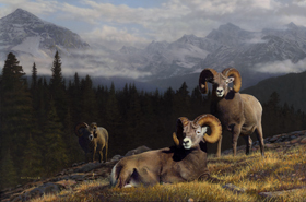 Home of the Mountain Gods - Big Horn Sheep