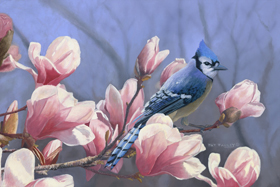 Springtime Blue Jay by Pat Pauley