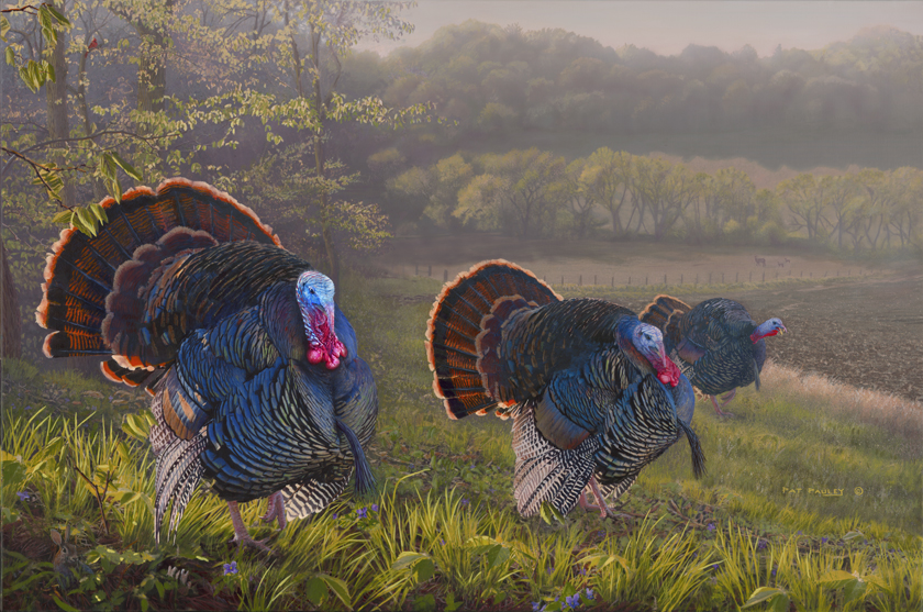 Spring Treasures Ii Turkeys Pat Pauley Wildlife Art